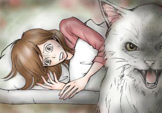 【知りたくなかった怖い話】シャーッ! と威嚇した猫のありえない展開! #24