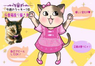 【猫さま占い】絶好調の猫さまは? 9月23日~9月29日運勢ランキング