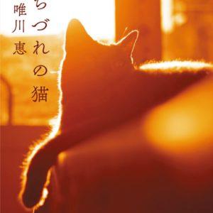 女性の人生に寄り添う猫の短編集 唯川恵の新作『みちづれの猫』