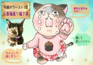 【猫さま占い】運を逃す猫さまは? 11月18日~11月24日運勢ランキング