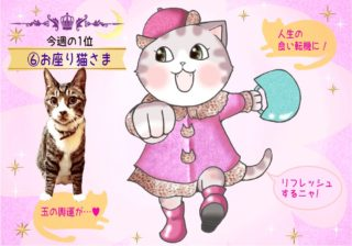 【猫さま占い】玉の輿運接近の猫さまは? 1月6日~1月12日運勢ランキング