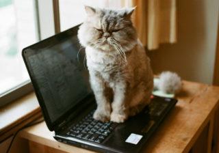 猫がトコトコ…「オンライン飲み会」で起こるペットのハプニング