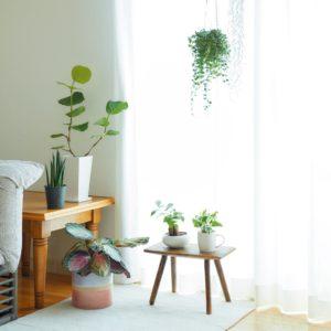 """あなたに""""ちょうどいい""""観葉植物の見つけ方 部屋を安らぎの空間に"""