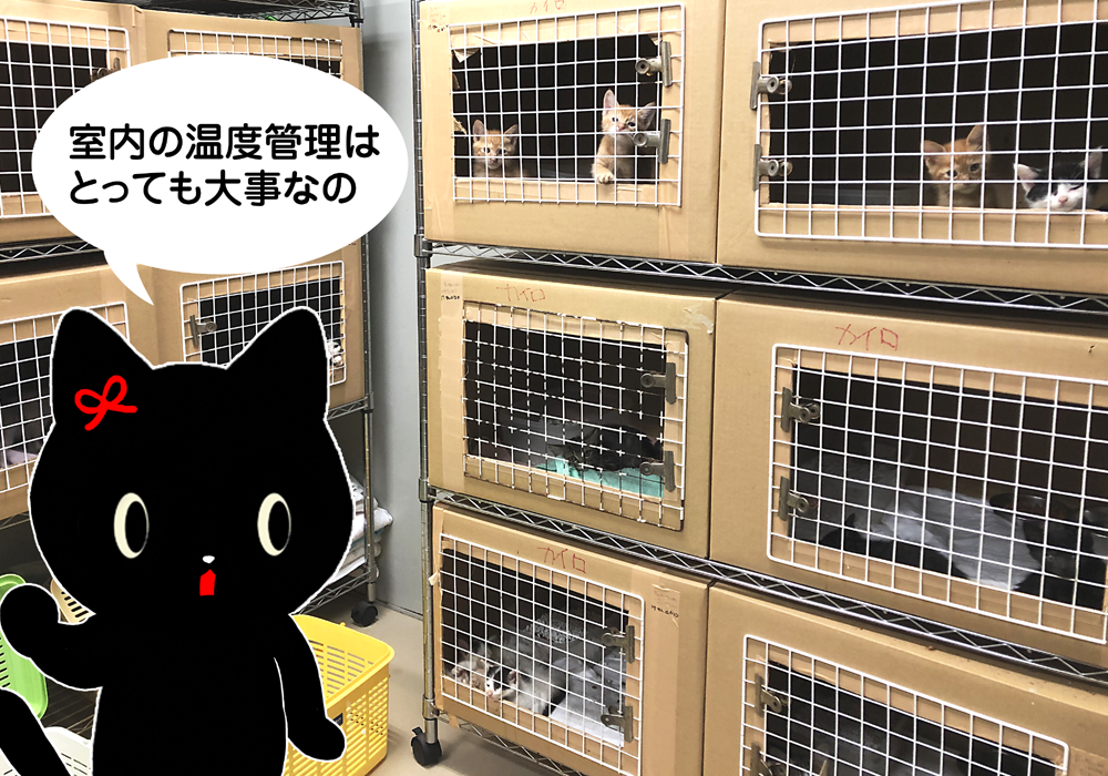 猫 アニマルシェルター 保護施設