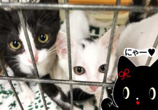 3匹の黒猫が「アニマルシェルター」に潜入! 命をつなぐ保護施設のリアル 【前編】