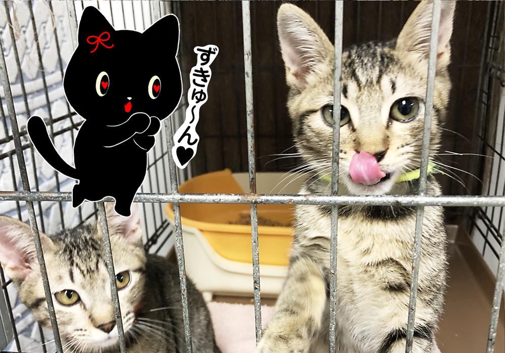 猫 保護猫 アニマルシェルター 保護施設
