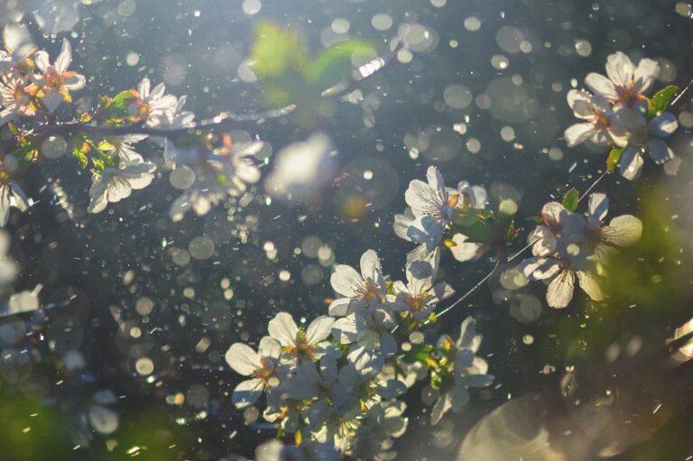 敏感肌 日焼け止め スキンケア 花粉 キュレル