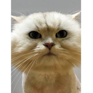 ドーン! 夢に出てきそうな「顔圧」強めの猫さま9選