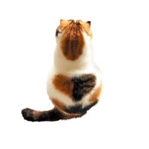 背中に2色使いのハート! 二度見しちゃう猫さまの「おもしろ柄」5選