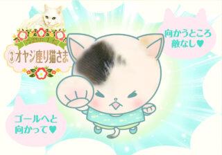 【猫さま占い】最強運の猫さまは?  7月5日~7月11日運勢ランキング
