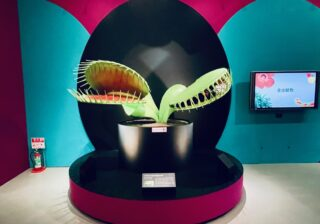 美しくて怖くてクサい…! 謎すぎる植物たちの展覧会