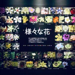 【画像】美しくて怖くてクサい…! 謎すぎる植物たちの展覧会