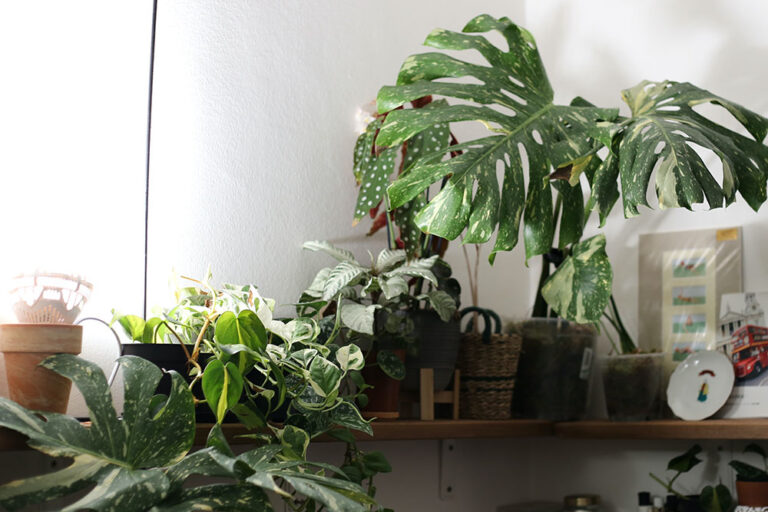 ロックダウンで生活が変わった!?ヨーロッパでコレクター続々の観葉植物