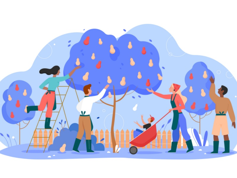 People gardeners working in garden vector illustration, cartoon flat man woman worker characters gardening, harvesting and picking harvest pears isolated on white