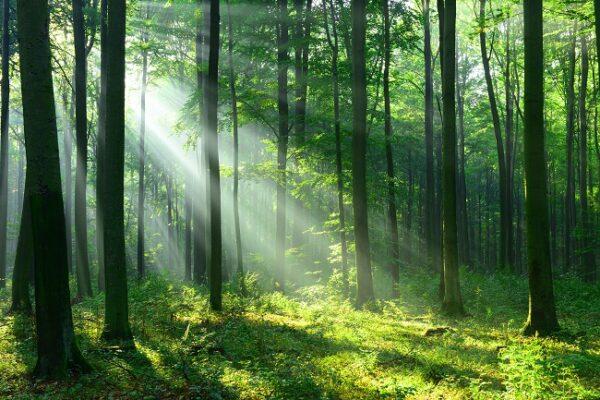 """素晴らしい快挙…  ロレアルが""""環境先進企業""""としてトリプルAを5年連続達成"""