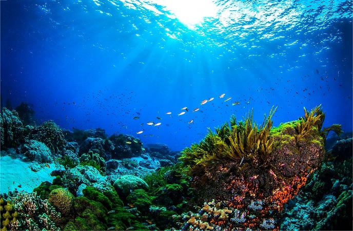 雪肌精Underwater,World,Coral,Reef,Panorama,Landscape