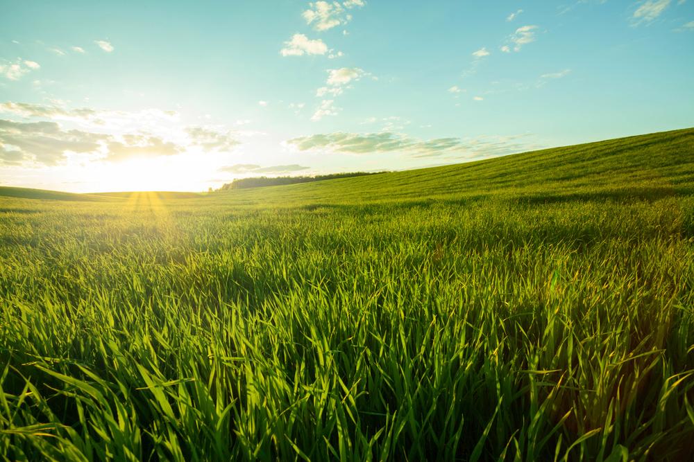 緑萌える草原