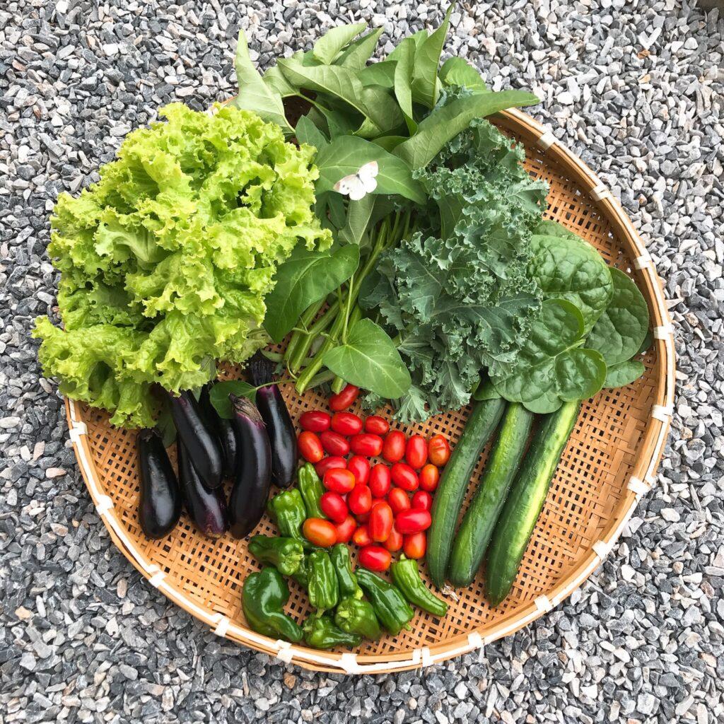 家庭菜園 エコ 野菜