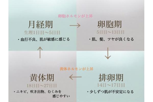 「4つのサイクル」とその時に感じる肌変化とは