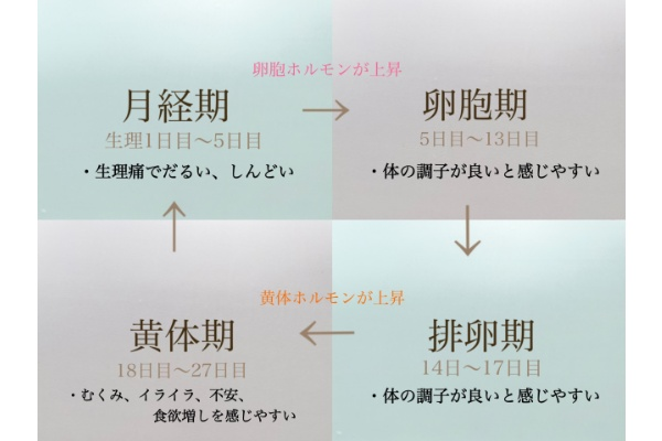 「4つのサイクル」とその時に感じる体の変化とは