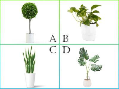 部屋に観葉植物を飾るならどれ? 「今のあなたが強化したいポイント」がわかる心理テスト