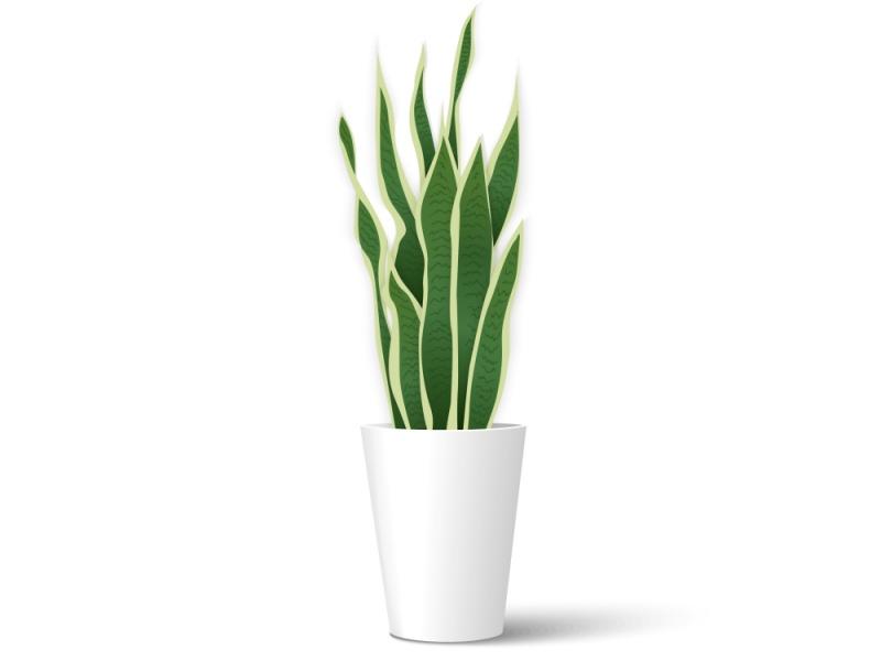 観葉植物 心理テスト