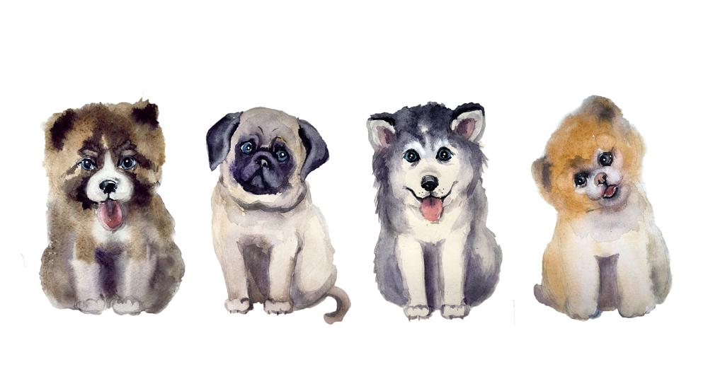 """飼うならどの""""犬""""を選ぶ ? あなたの「人づきあいの傾向」がわかる心理テスト"""